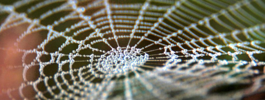 slider-herbst_Spinne14